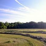 Allegan Field